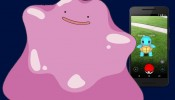 Finding Ditto