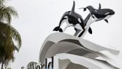 No more orcas at SeaWorld Abu Dhabi.