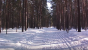 The contestants will have to survive in the chilling forest of Siberia