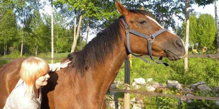 'Minecraft' Getting Horses? [RUMOR]